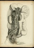 Autonomic nerves and ganglia of the abdomen and pelvis