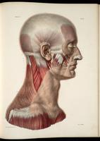 Facial muscles, masticatory muscles, neck muscles