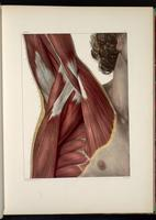 Muscles of the shoulder and axilla