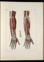 Muscles of the arm and hand