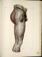Fascia of the thigh and buttocks