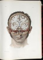 Dissection of the face and brain