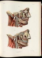 Dissection of the face and the trigeminal nerve