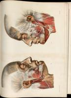 Variations of the facial nerve