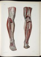 Deep nerves of the lower leg