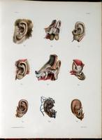 External and middle ear
