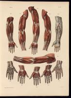 Anomalies of the arteries of the forearm and hand