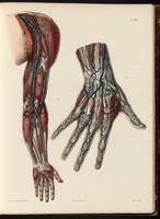 Veins of the arm and hand