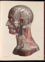 Veins of the face