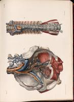 Lymphatic vessels and lymph nodes of the pelvis and spine, thoracic duct