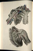 Dissection of the shoulder and axilla