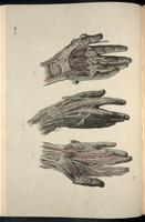 Dissection of the hand, arteries of the hand