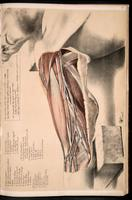 Dissection of the upper arm and axilla