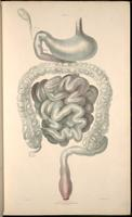 Organs of the gastrointestinal system