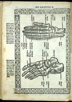 Bones of the hand and foot