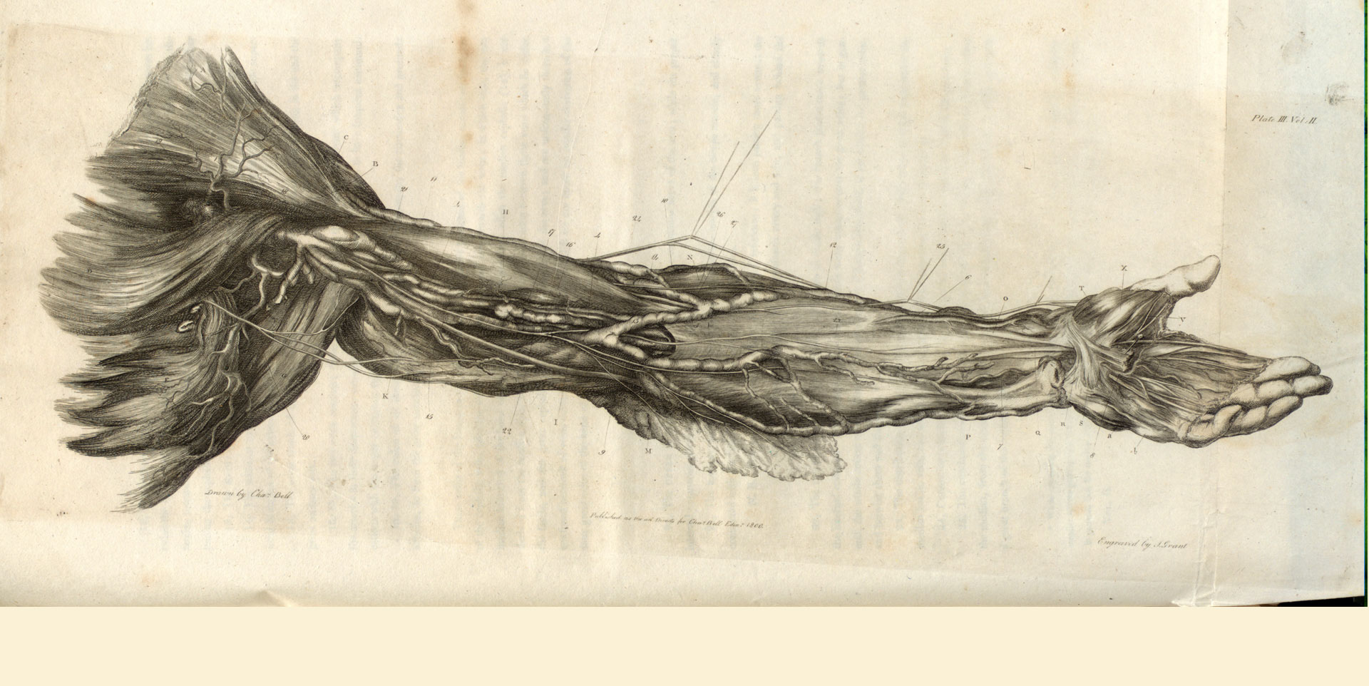 Dissection of the arm and hand.