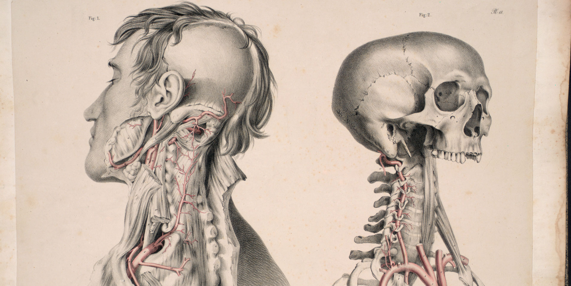 Anatomia Collection: anatomical plates 1522-1867 | Anatomical Plates ...